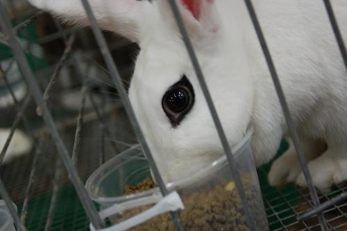 Eyeliner_bunny